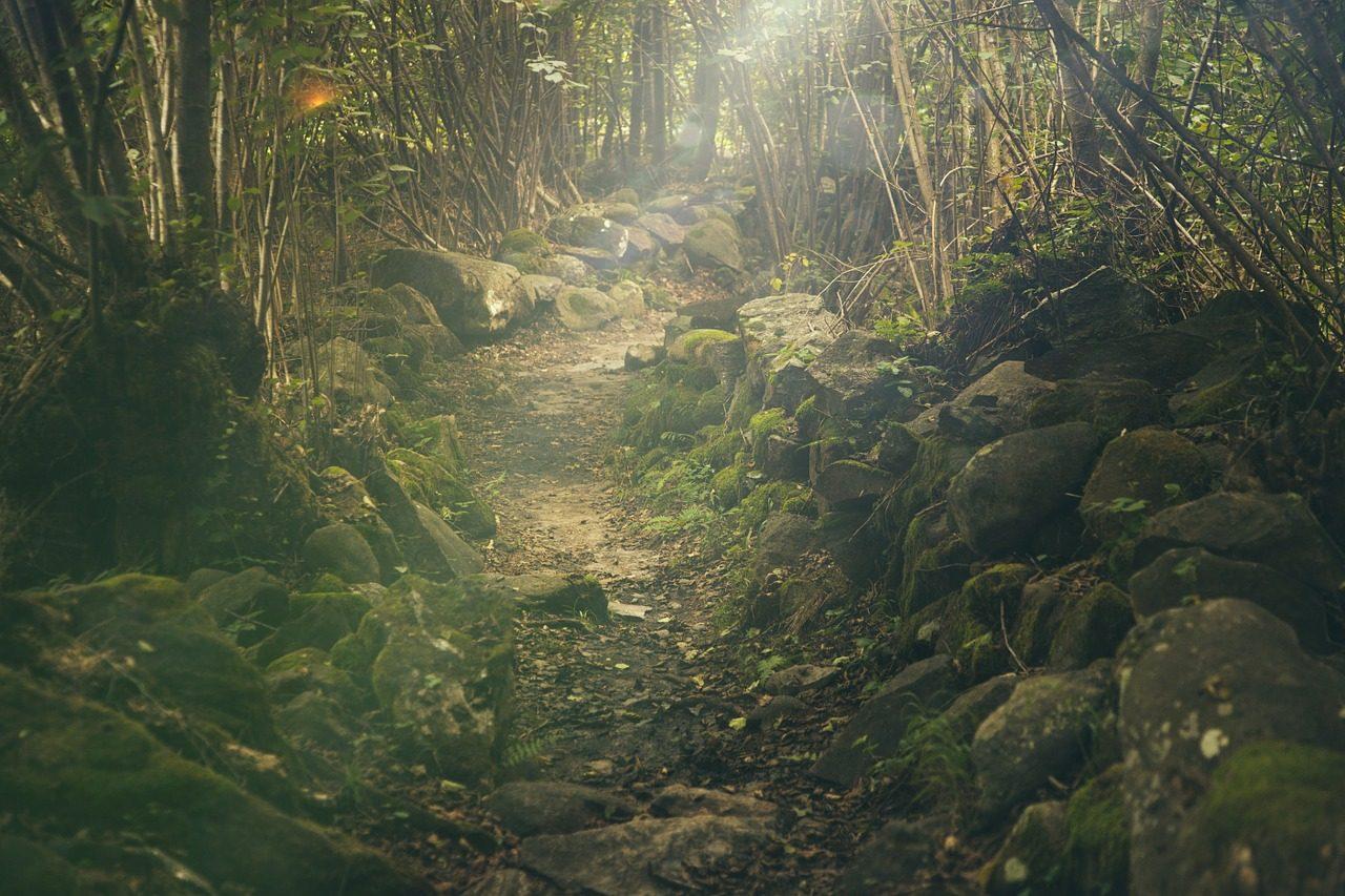 forest-438432_1280-1280x853.jpg